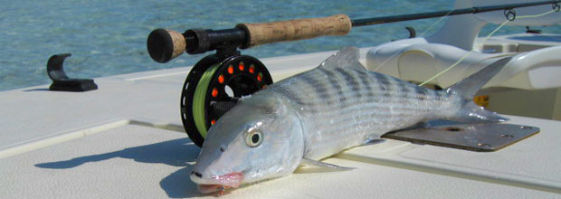 Bonefishing charter around providenciales and on the flats for Turks and caicos fishing